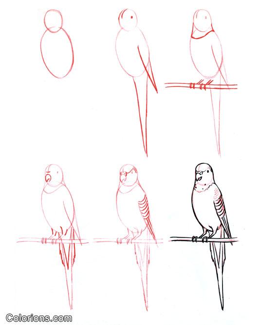Dessin - Dessiner un perroquet ...