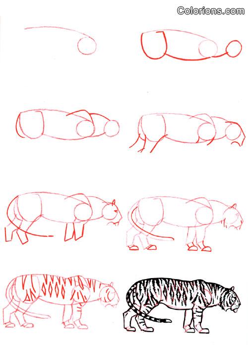 Comment dessiner tigre - Apprendre a dessiner un tigre ...